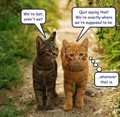 We're lost, aren't we? - LOLcats is the best place to find and submit funny cat memes and other silly cat materials to share with the world. We find the funny cats that make you LOL so that you… Silly Cats, Crazy Cats, Cats And Kittens, Funny Cats, Funny Pix, Baby Kittens, Stupid Funny, Funny Stuff, Warrior Cat Memes