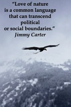 """""""Love of nature is a common language that can transcend political or social boundaries.""""  Jimmy Carter – BALD EAGLE in flight over Chilkat Mountains, Haines, ALASKA -- Explore journey quotes, both ancient and modern, at http://www.examiner.com/article/travel-a-road-of-literate-quotes-about-the-journey"""