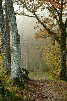 Les arbres Track in a misty autumn forest (Pays de la Loire, France) by Anne Forest Path, Autumn Forest, Misty Forest, Forest Road, Beautiful World, Beautiful Places, Walk In The Woods, Pathways, Belle Photo