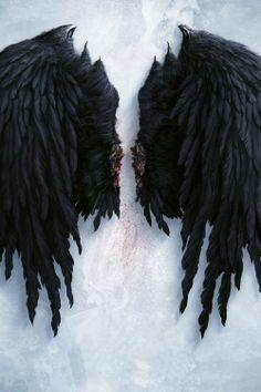 Cas's Wings