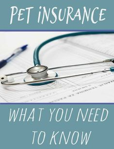health insurance great comparison of pet insurance companies and perfect questions to ask to determine whether you should get insurance for your pet Health Insurance Options, Supplemental Health Insurance, Best Health Insurance, Dog Insurance, Insurance Companies, Insurance Benefits, Insurance Quotes, Pet Plan, Cushing Disease