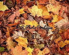 Photograpy/Flower/Nature/Stock/Digital Printable Photos by ERPhotoBoutique