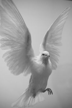 """Dove in Flight"" by Mark Gorman, via Flickr ; Jehovah used a dove to represent his peaceful holy spirit, which calms us in the face of adversity (if we pray for it), strengthens us when we need courage, and helps to embolden us to speak the Truth."