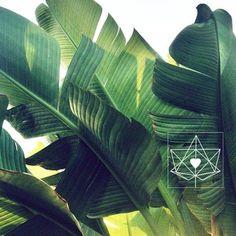 New flowers tropical nature plants Ideas Leave In, Palmiers, Tropical Plants, Tropical Leaves, Tropical Garden, Cacti Garden, Tropical Fruits, Tropical Paradise, Green Plants