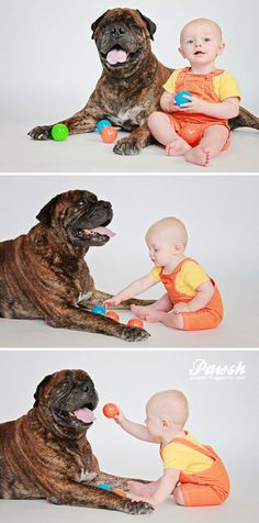 Look how relaxed the dog is with this child!  Bullmastiffs are gentle loving and loyal!
