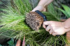 Gardening 101: How to Care for Perennial Grasses: Gardenista