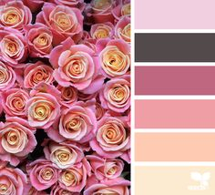 Design Seeds celebrate colors found in nature and the aesthetic of purposeful living. Colour Pallette, Colour Schemes, Color Combos, Color Patterns, Design Seeds, Flora Design, Chocolate Color, Creative Colour, Color Swatches