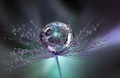 raindrop images | ... , Colours, Flower, Large, Raindrop, Raindrops, Reflection, Tiny