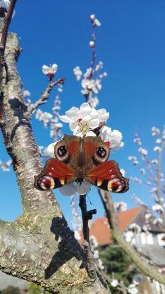 Our garden ❤ #butterfly