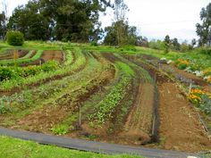5 Permiculture Tips From the Pro's - Natural Living Mamma garden beds on contour irrigation technique
