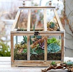 Rustic Wooden Greenhouse Is A Good Container For A Small Succulent Indoor  Garden   Shelterness