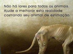Castre seu animal.
