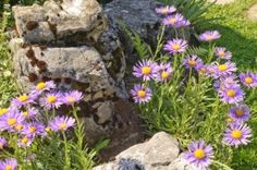 ...i want big boulders in our front yard where wild flowers can grow with very little water...