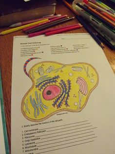 plant cell coloring | teaching: science | pinterest | plant cell ... - Animal Cell Coloring Page Answers