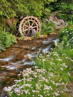 Water Wheel From Mill