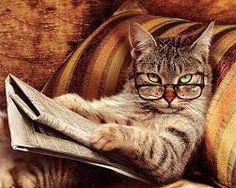 Resultado de imagem para gato de oculos