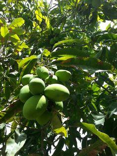 Mango of Oman Salalah, Beautiful Places, Mango, Places To Visit, Earth, Adventure, Middle East, Manga, Adventure Movies