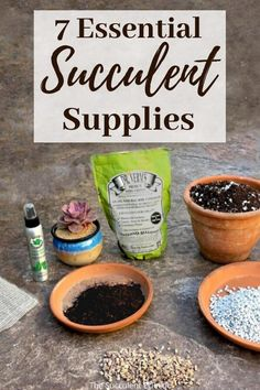 Learn all about the 7 essential succulent supplies and how to use them. These supplies help you to get the watering right, perfect lighting for succulents, treat and prevent insects and more.  These supplies make growing healthy, happy succulents so much easier!  Pin now, read later - your succulents will thank you!  #succulents #succulentcare #succulentsupplies
