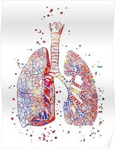 Lungs, lungs anatomy, medical art, watercolor lungs, abstract lungs Poster Human Anatomy For Artists, Human Anatomy Art, Lung Anatomy, Medical Office Decor, Art Watercolor, Medical Art, Medical Illustration, Canvas Prints, Art Prints