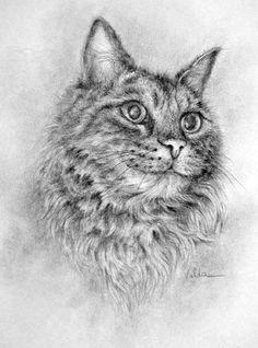 ??? - - - (001-027) - Cat Named Fluffy