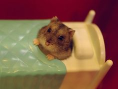 Tuckin' myself into bed | 19 Hamsters Doing People Things