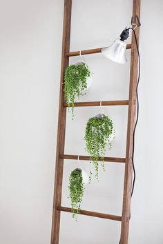 Diy ladder with faux succulents hanging from S hooks and light fixture can probably be found any hardware store