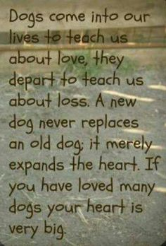 I have loved many dogs and they're all in my heart. To go with me where ever I go.