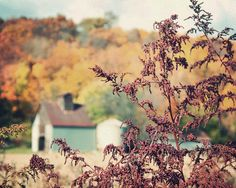 Autumn at the Farm - fall photography, country decor, nature, fall colors, Midwest, barn, wall art on Etsy, $28.00