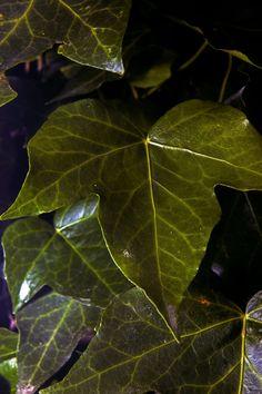 Leaf 3 by Mackingster.deviantart.com