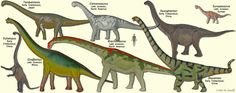 Macronarian Sauropods