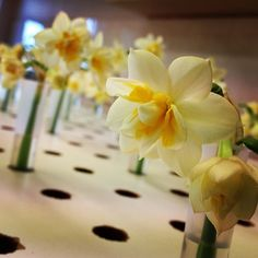 Daffodil mttnc0155's photo on Instagram