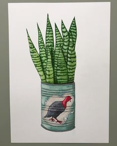 Drawingplantlady. A canned sansevieria 