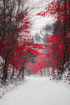 36 Trendy Ideas For Painting Landscape Winter Snow Scenes Winter Szenen, Winter Christmas, Winter Road, Winter Mountain, Winter Ideas, Christmas Ideas, Merry Christmas, Snow Scenes, Winter Beauty