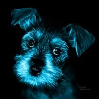 Cyan Salt and Pepper Schnauzer Puppy pop art by artist James Ahn. Schnauzers are a loyal breed. Bred as a rat catcher, yard dog, and guard dog. They have high energy and are intelligent... They make great companions... Schnauzer 7206   © Rateitart.com // All Rights Reserved.   #Cyan #ColorCyan #CyanArt #CyanPopArt #Schnauzer # SchnauzerArt # MinatureSchnauzer #DogArt #PopArt #DogArtPrints #ILoveSchnauzer #SchnauzerArtPrint