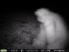 """Ohio is known for Bigfoot sightings, ranking 4th in the United States...and I have seen them...not just """"him""""...in Lucasville, OH and at Girl Scout Camp, Camp Molly Lauman"""