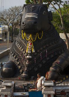 'Nandi Bull'- A giant granite carving, halfway to the top of Chamundi Hills, Mysore, Karnataka, India