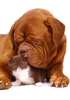 Puppy: You smell nice. Kitty: Thank ... you. Not like ... food though, right?     Cute puppy and kitten!