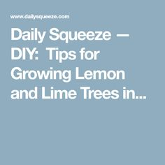 Daily Squeeze — DIY:  Tips for Growing Lemon and Lime Trees in...