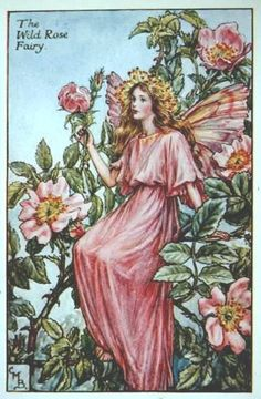 Wild Rose Flower Fairy original vintage print.     Printed c.1927 it is by the artist/author/illustrator Cicely Mary Barker.    The Wild Rose Flower F