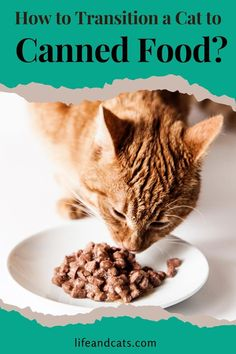 It can be a challenge to  transition your cat cat to a wet food diet but with patience, a few  tricks and some bribery you will succeed. Here are some tips for making a  successful switch. Best Cat Food, Dry Cat Food, Meat Baby Food, Baby Food Recipes, Cat Nutrition, Kitten Care, Cat Care Tips, Cat Treats, Cat Health