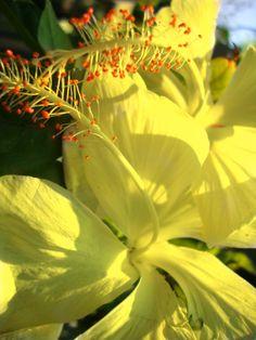37 Best Flowers Of India Images Goa India India Indian