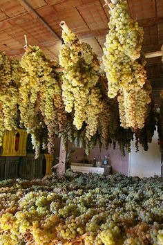 Greve in Chianti in Toscana - getting ready to make the wine