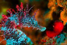 Hippocampus fluorescence by Rai Fernandez, via Flickr