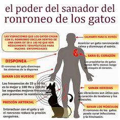 SandRamirez contra el maltrato animal. • www.luchandoporellos.es: EL RONRONEO DE LOS GATOS.