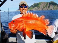 Yellow Eye Rockfish  a.k.a. Pacific Red Snapper Beautiful Prince William Sound