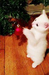 Christmas Kitty gifs gif cute cat kitten christmas christmas gifs christmas gif