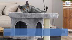 Tuna Bites Homemade Cat Treat Recipe for Sensitive Stomach - CatVills Tuna Cat Treat Recipe, Flat Faced Cat, Cat Diet, Cat With Blue Eyes, Exotic Shorthair, Cat Trees, Cat Signs, Cat Condo, Fluffy Cat