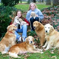 For the love of goldens...I love these dogs!!