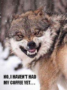 Go ahead! humor