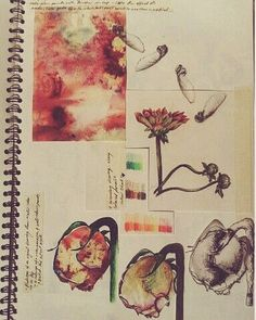 throw back to 4 years ago! #sketch #sketchbook #flowers #brusho #fineliner #pencil #watercolor #painting #paint #autumn #flower #orange #drawing #art #watercolour by jemmafrater